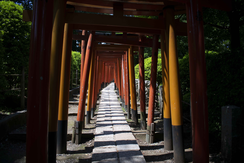 「粘りにねばった根津神社の千本鳥居」~日暮里(6)太田(2019.8.4)~